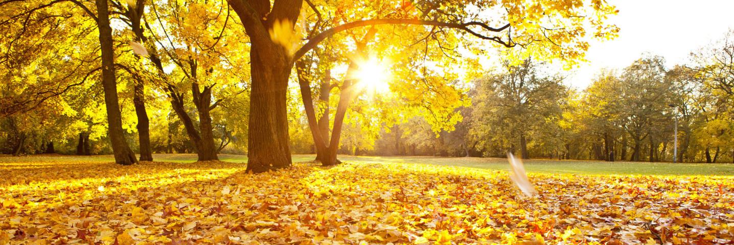 Das Bild hat nichts mit einer Spedition zu tun. Es zeigt einen Wald mit einer Lichtung. In der Mitte steht die Sonne sehr tief in Richtung Betrachter. Es ist Herbst, auf dem Boden liegt viel gelbes Laub.