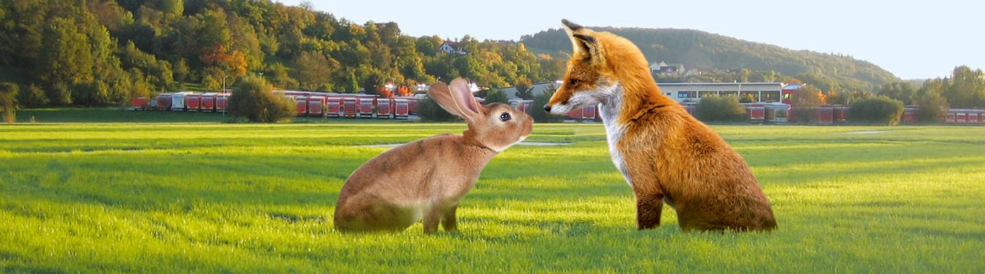 Ein niedliches Bild. Fuchs und Hase schauen sich auf einer gewaltig großen Wiese an. Im Hintergrund sieht man die Planentieflader der Spedition und den Teil eines Gebäudes.