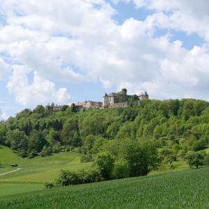 Man sieht das Schloss Waldenburg auf der Anhöhe. Rund herum ist sattgrüner Wald.
