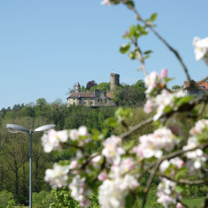 Links sieht man die Burg Krautheim, rechts sind mehrere Blütenzweige eines Baumes.